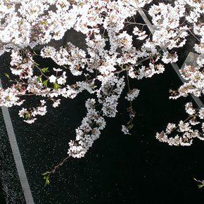 第14回 桜/輪/天